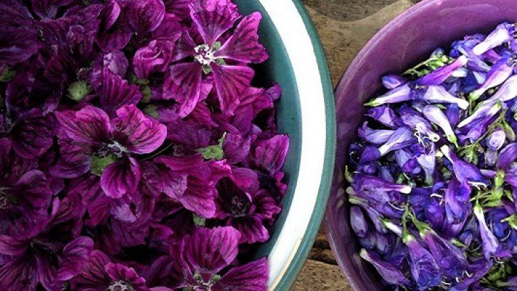 Hatmi Çiçeğinin Faydaları ve Çayı
