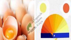 Yumurtayı Kırdıktan Hemen Sonra Bu Sarı Renge Çok Dikkat Ediniz..!