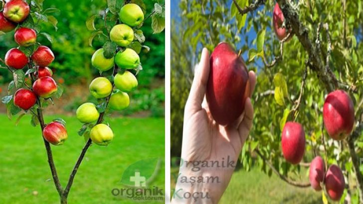 Güne Yeni Başlarken Elmanın Mucize Faydası…Şaşıracaksınız..!