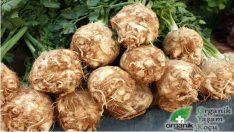 Altın kadar değerli sebze: Kerevizin Faydaları ve Yemeği