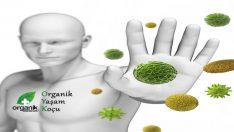 Bağışık Sisteminiz Zayıf ise; Güçlendirecek Önemli Tavsiyeler..!