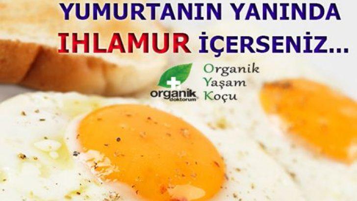 Yumurta Yerken Beraberinde Ihlamur Tüketin. Neden Mi? İşte Cevabı