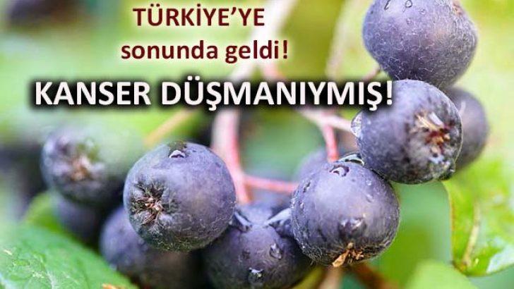 Mucize Meyve Aronia Meyvesinin Faydaları