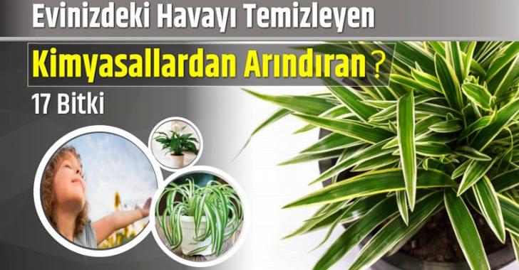 Evin Havasını Anında Temizleyen ve Kimyasallardan Arındıran Bitkiler