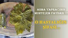 Varisin Şifası Asma Yaprağı