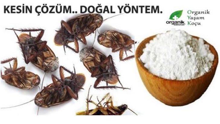 İstenmeyen Haşere ve Hamam Böcekleri için Ev Yapımı Böcek İlacı