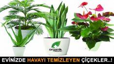 Evde Ki Havayı Temizleyen Bitkiler