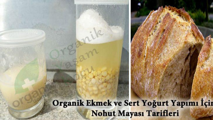 Yoğurt ve Ekmek Mayası için Nohut Mucizesi