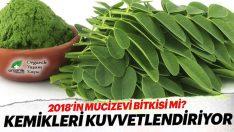 Kemikleri Kuvvetlendiren Mucize Bitki Moringa