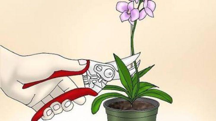 Orkideleriniz Bu Yöntemlerle 2 Haftada Hayata Dönsün
