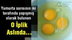 Hiç Merak Ettiniz Mi? Yumurtanın İçindeki O Beyaz Şey Nedir?