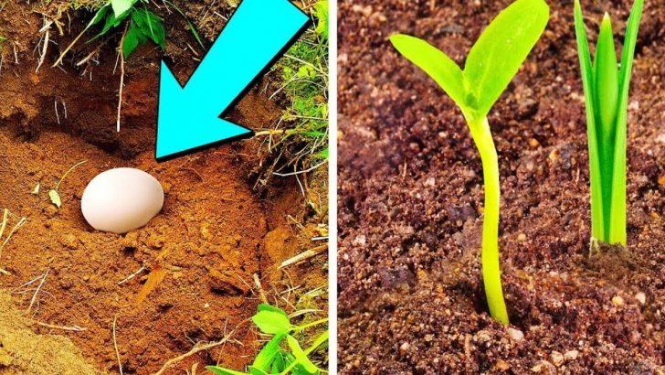 Saksının içine yumurta koymanın inanılmaz faydaları!